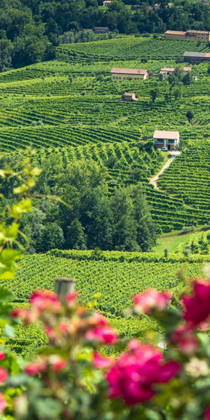 Prosecco Wine Tour Strada del Prosecco Wine Hotel San Giacomo